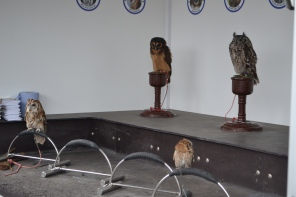 The owl on the far left kept trying to get free,